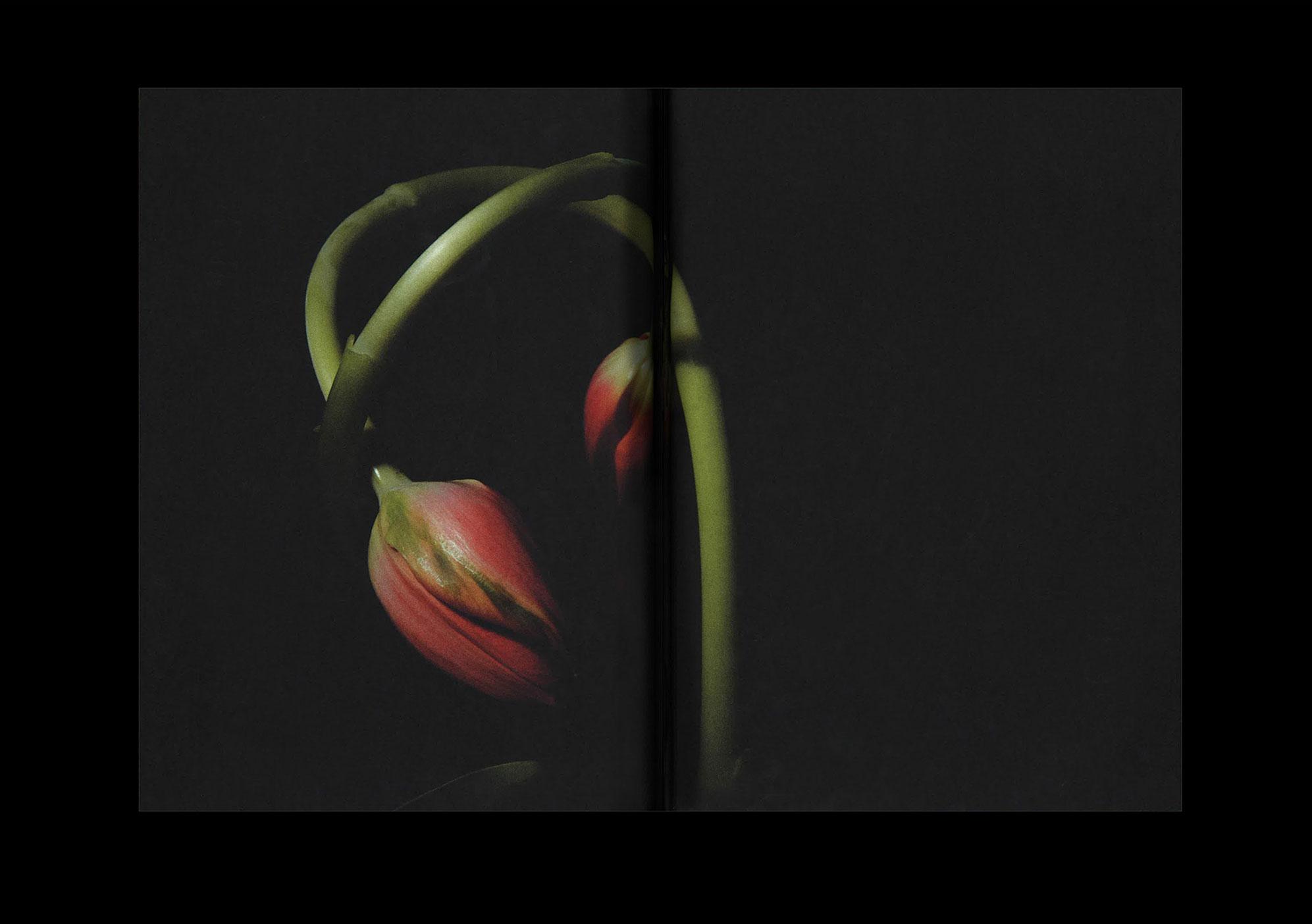 RJ_Semplice_flowers_02_taller_@2x